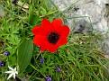 Anemone (1)