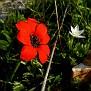 Anemone (5)