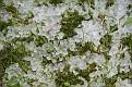 Garden 2012 October 27 Hail (1)