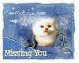 MissingYou CatInJeans VT-vi