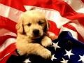 Animals_Dogs__001811_7.jpg