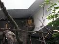 2007 Toledo Zoo 040
