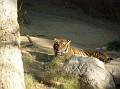 LA Zoo 010