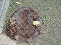LA Zoo 025