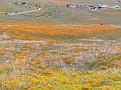 Poppy Reserve2008 011.jpg