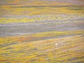 Poppy Reserve2008 014.jpg