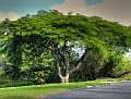Brisbane Botanic Gardens 003