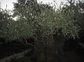15 06 Gethsemane (42)