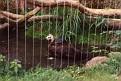 1993 Bronx Zoo 14561