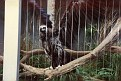 1993 Bronx Zoo 14562