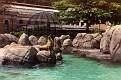 1993 Bronx Zoo 14568