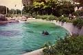 1993 Bronx Zoo 14569