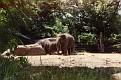 1993 Bronx Zoo 14572