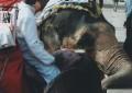 Jaipur 008