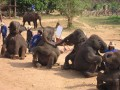 Mae Ping Elephant Camp near Chiang Mai in Northern Thailand Day 12 Feb 23-2006 (80)