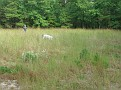 Sportsmen's Jamboree, Maurice River Township, Nj  9-13-08.