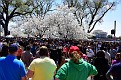 CherryBlossomFest APR2015 437