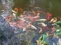 Morikami Japanese Gardens15