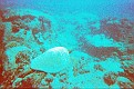 scuba (7).jpg