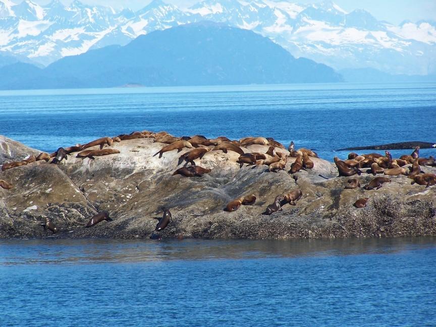 Sea lions on Marble Island