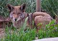 Chewie-March-2011_DSC4203.jpg
