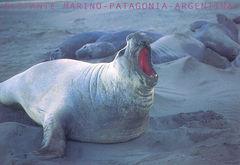 Argentina - ELEPHANT SEALS NA