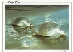 Costa Rica - SEA TURTLES