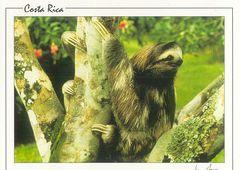 Costa Rica - SLOTH NA