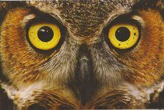 Greece - OWL NB