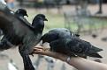 Eddi Gouraige took this shot of 2 pigeons on Cristina's arm.