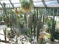 203. Cacti Succulents