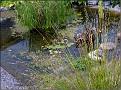 DSCN1556 Plantedammen 05 08 12