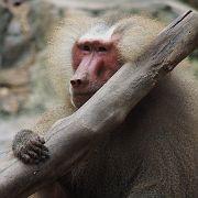 Singapore Zoo Parks 05