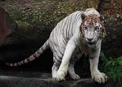 Singapore Zoo Parks 19