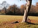Sonnenbad im Englischen Garten