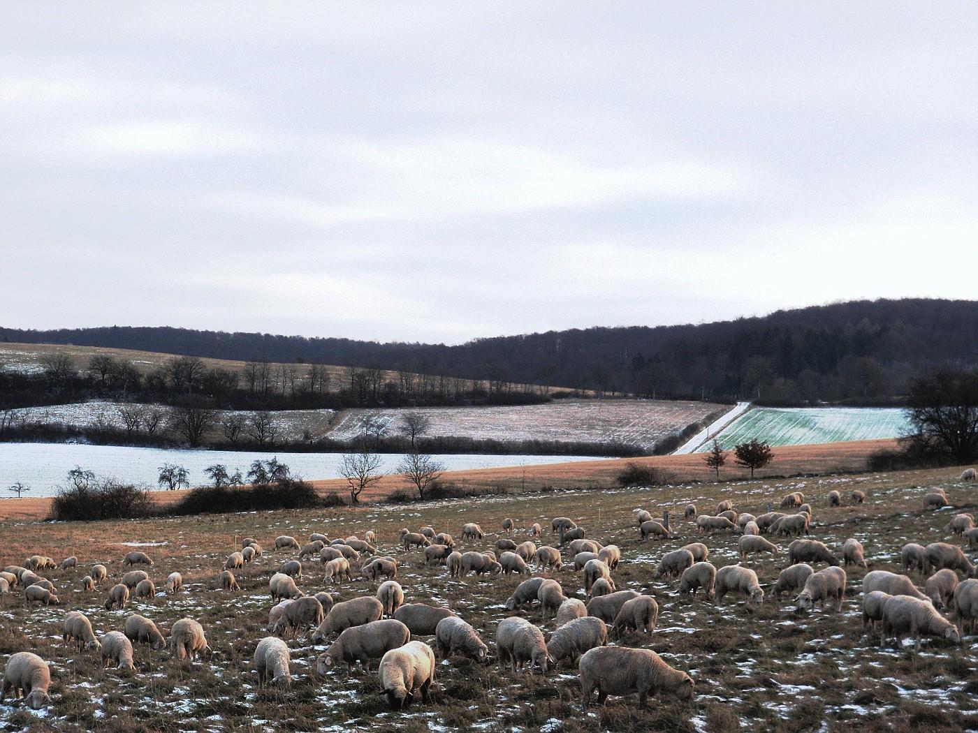 Dicke Wollpullover schützen vor Kälte :-)