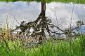 tree reflecting