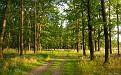 forest-wallpaper-1920x1200-078