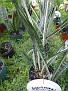 Plants Names DX7 202
