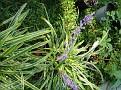 Plants Names DX7 214