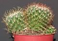 August082006 Image01 Mammillaria sp