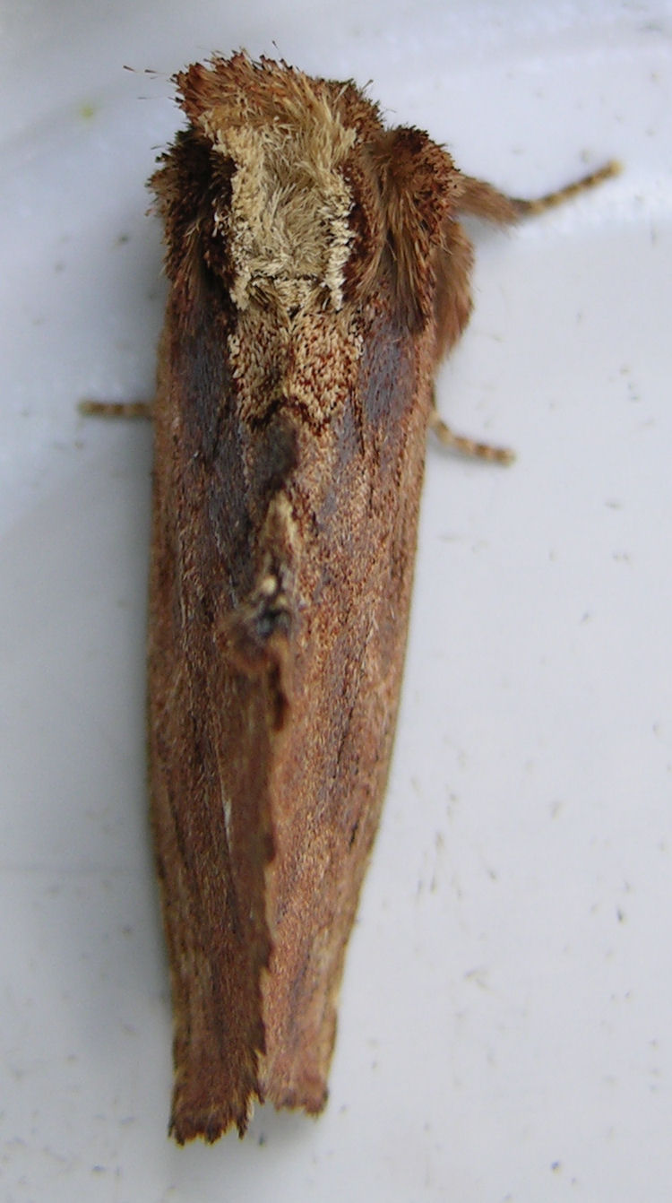 July212008_Image25_Moth-vi.jpg