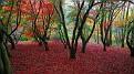 nature-landscape-good-looking-wallpaper-nature-landscape-hd-picture-download-autumnal-colours-desktop-wallpaper-autumnal-colours-list-autumnal-colours-autumn-colours-clothes-autumn-colours-palette-aut