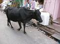 Jaipur, India Market and Street Life (32)
