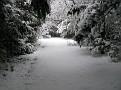 Snow Storm of December 19 2009 (11)
