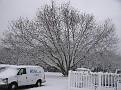 Snow Storm of December 19 2009 (83)