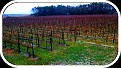 Sunday December 12, 2010.  Natali Vineyards in December.  Beautiful YEAR-ROUND!!!