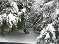 Snowstorm 2-6-2010 (25)