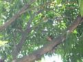 2011-05-26 -- Costa Rica 1st Anniversary (21)