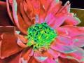 Flower Service 062b